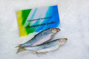 Сельдь (социальная рыба)