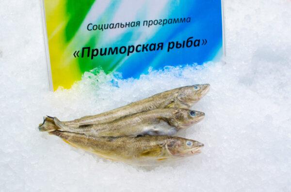 Навага (социальная рыба)